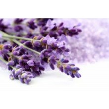Fragrance Oil -Lavender