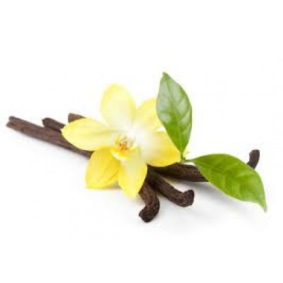 Fragrance Oil -Vanilla